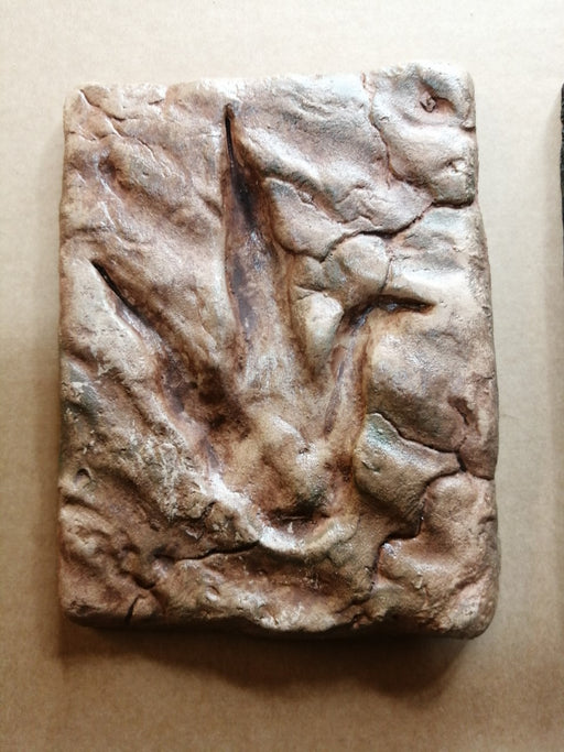 Dinosaur Footprints UK Replica available from The Prehistoric Store