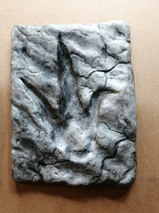 Theropod footprint UK replica available to buy from The Prehistoric Store