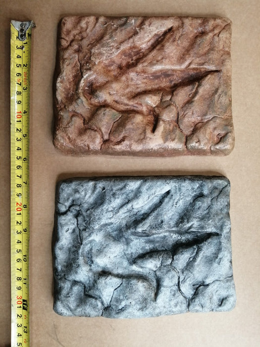 Theropod Footprint Small 19cm X 15cm