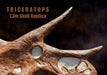 Triceratops prorsus Skull Replica - Hailed as the most accurate Triceratops skull replica available