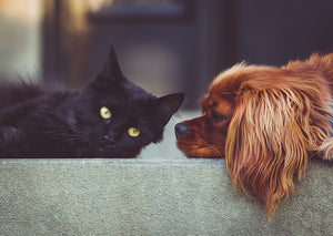 Dogs Are Better Than Cats: Research (and Anecdote) Prove It!