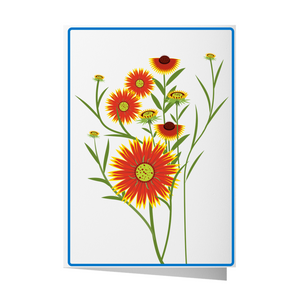 Gaillardia Greeting Card