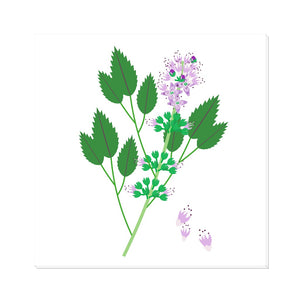 Peppermint Plant Canvas Wrap
