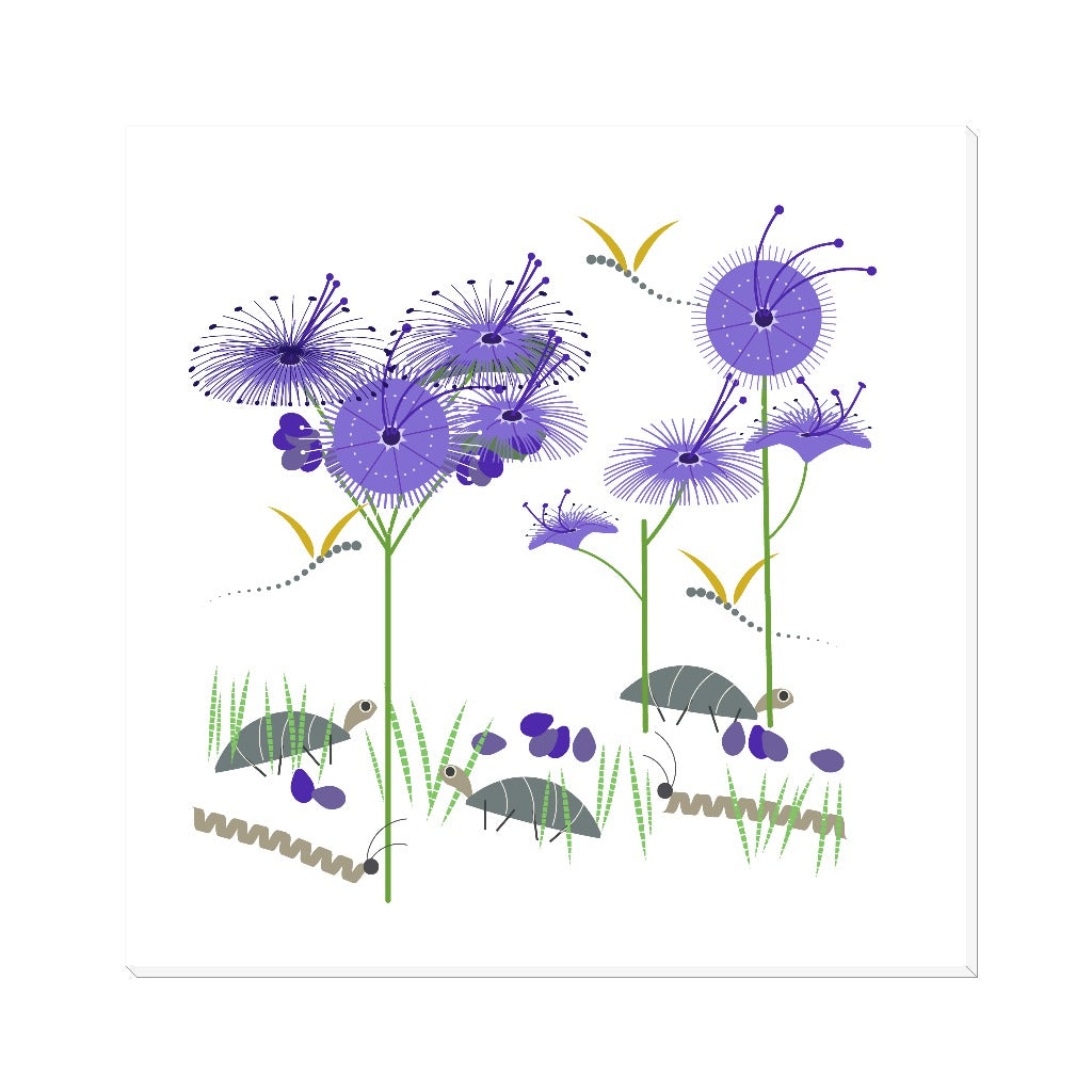 Bluebeard Flowers Canvas Wrap