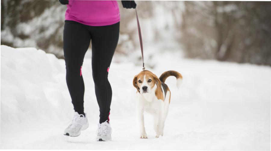 How to run with your dog