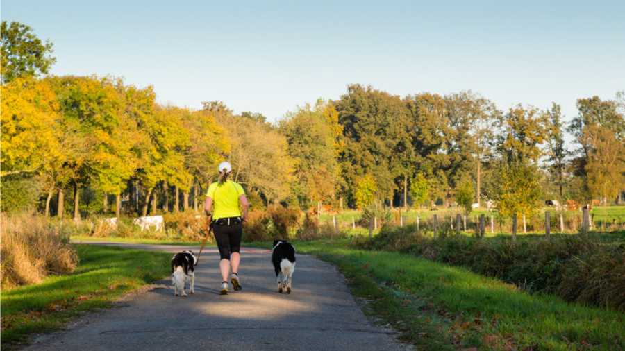 runner with dogs