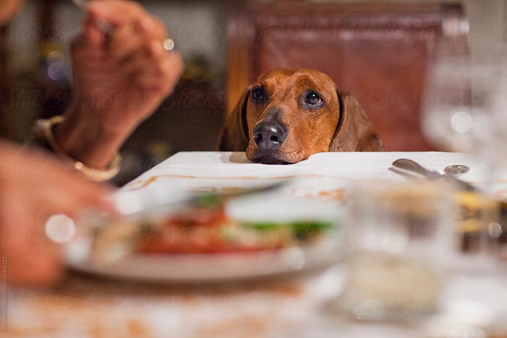Is Your Dog A Picky Eater? Try this...