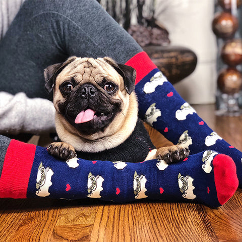 Navy Pug Dog Socks and a Cute Pug