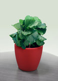 AQUAS Self-Watering Planter in Red