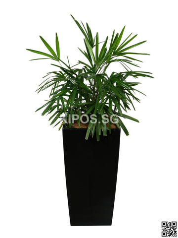 Rhapis Excelsa in Vertical Planter (Rental)