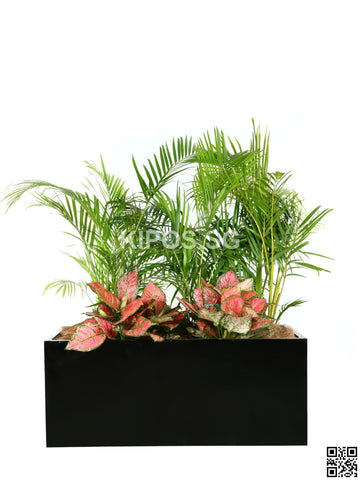 CHAMAEDOREA cataractarum in Rectangular Planter with ground cover plants