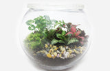 Spherical Terrarium