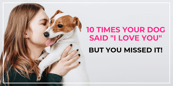 10 ways your dog says i love you