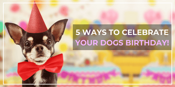 5 ways to celebrate your dogs birthday