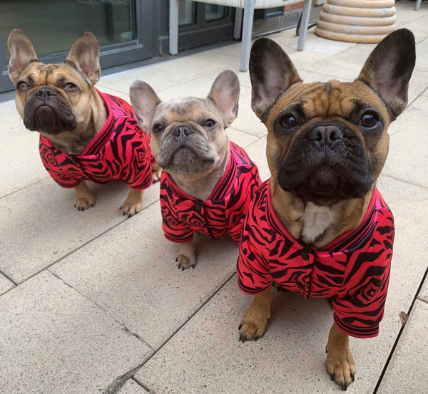 Breeding Frenchies - How Many Puppies Can a French Bulldog Have?
