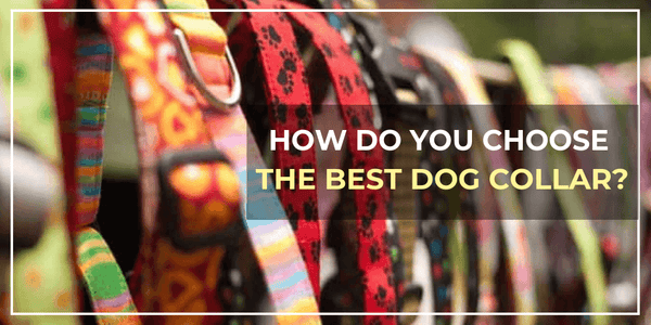 Dog Collars - How Do You Choose The Best dog Collar