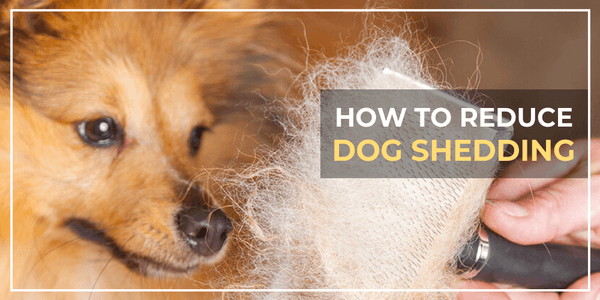 How To Reduce Dog Shedding