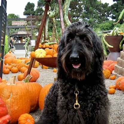 10 Fun Things to Do With Your Dog This Fall