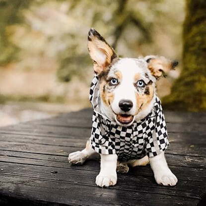 Must-Have Pieces for Your Dog This Winter & Fall