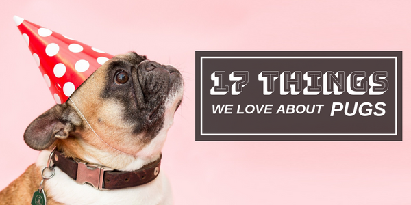17 Things We Love About Pugs