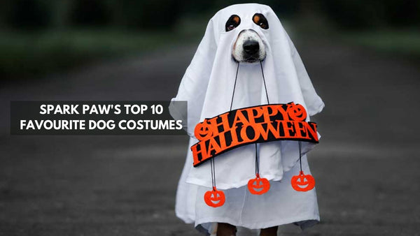 Top 10 Best Dog Costumes of All Time