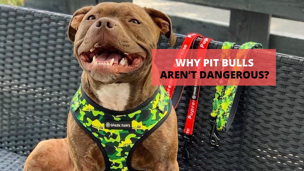 Why Pit Bulls Aren't Dangerous