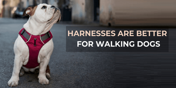 Why Dog Harnesses are better for walking dogs