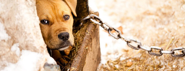 Our Battle Against Animal Cruelty & Dog Fighting