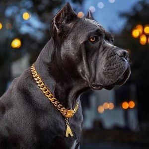 The Best Dog Collar for Large / Big Dog Breeds
