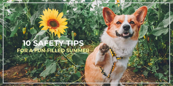 10 Safety Tips For a Fun-Filled, Worry-Free Summer With Your Dog