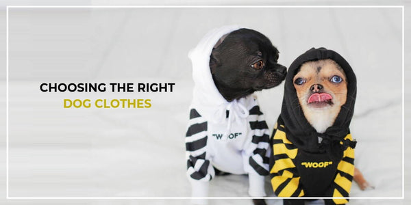 5 Things To Consider When Choosing Dog Clothes For Your Pup