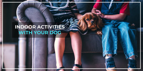 10 Fun Things To Do With Your Dog At Home