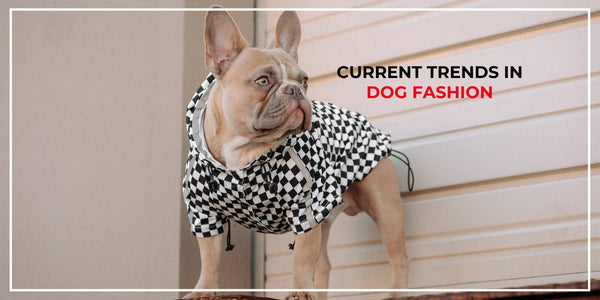 Current Trends in Dog Fashion: Your Pup's Wardrobe Essentials