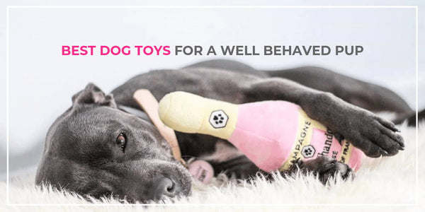 Best Dog Toys for a Well-Behaved Pup – Do you have all 4?