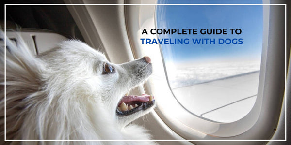 Traveling With Dogs - Everything You Need to Know