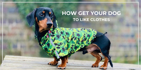 How To Get Your Dog To Like Clothes
