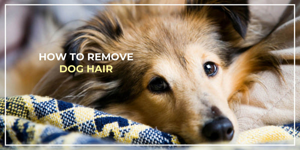 How to Remove Dog Hair From Your Clothes Easily