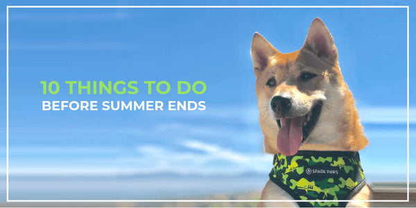 10 Ideas For An Epic Summer With Your Dog