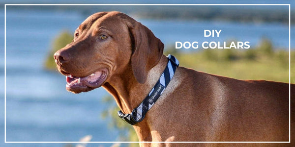 DIY Dog Collars: A Guide to Homemade Collars for Your Pup