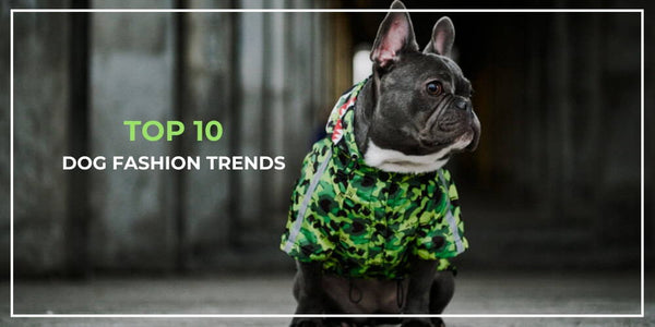 Top 10 Dog Fashion Trends to Watch out for in 2019