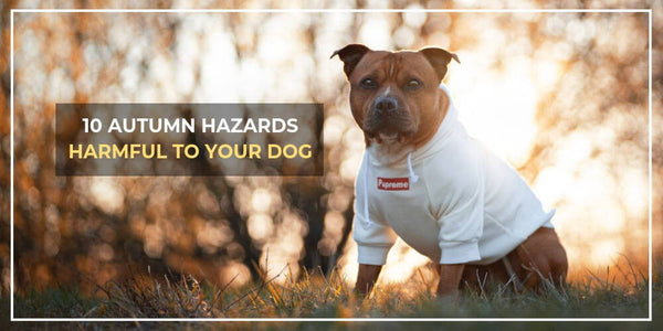 10 Common Hazards To Dogs In Autumn