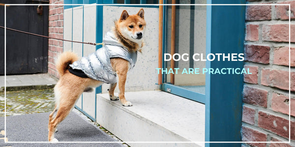 10 Types of Practical Dog Clothes You Actually Need