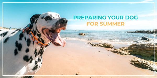 Excited for Summer? Here's How to Prevent Your Dog From Overheating!