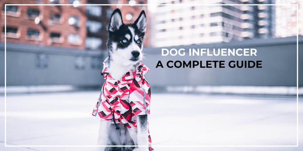 Dog Influencer Guide: Turn Your Dog Into The Next Social Media Superstar!