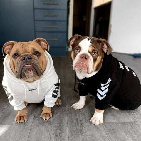 Poppy and Flo wearing the Woof Dog Hoodie in White and Black