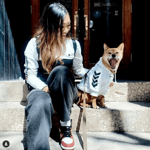Lupe the Shiba Inu people-watching while wearing the WOOF Dog Hoodie in White.