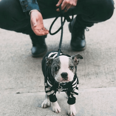 A little pup ready to meet new friends while wearing the WOOF Dog Hoodie in Black