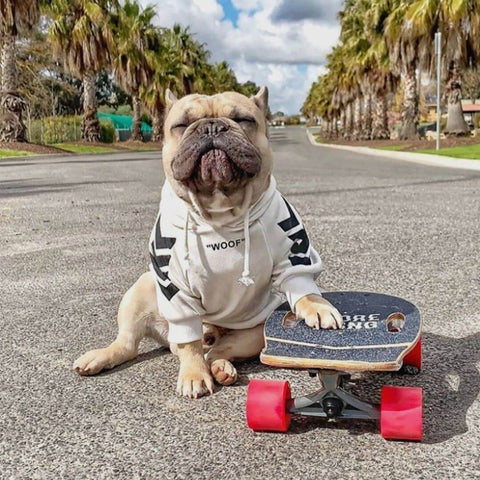Pepsi the French Bulldog wearing the WOOF Dog Hoodie in White while skateboarding