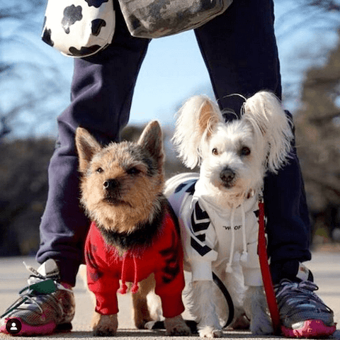 A Norwich Terrier and White Schnauzer wearing the WOOF Dog Hoodie in Red and White
