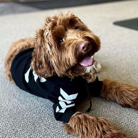 @theo_dorabledoodle wearing the WOOF Dog Hoodie in black